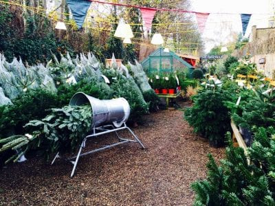 Buy Christmas Tree Online From Battersea Flower Station