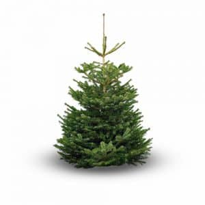 Buy Christmas Tree Online - Non-Drop Nordmann