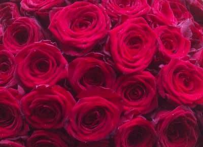 Valentines Roses Close Up Battersea Flower Station