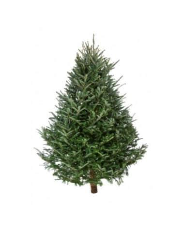 Spruce Christmas Tree London