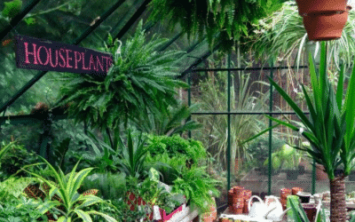 Best Plant Shops in London – Ideal Flatmate