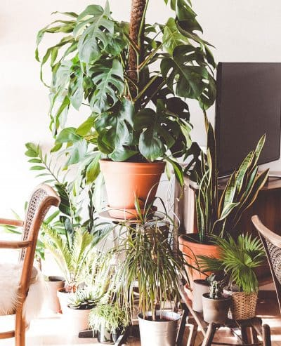 How not to kill your houseplants workshop
