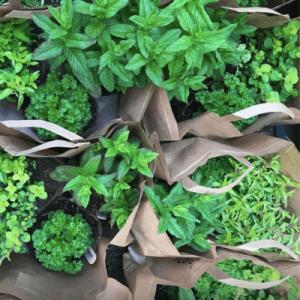 bundle of herbs