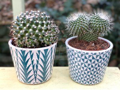 Cactus aztec 2