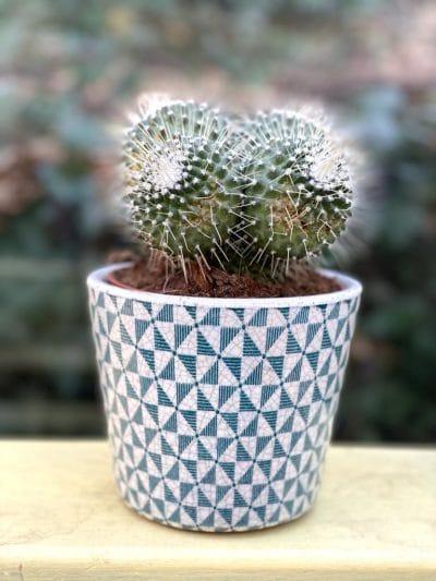 Cactus aztex pot