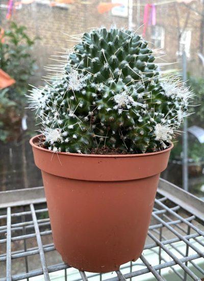 Cactus Plant 9