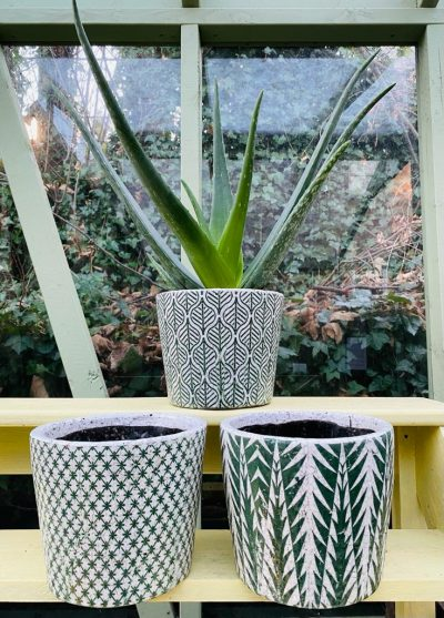 Aloe Vera in Green Aztec Pot